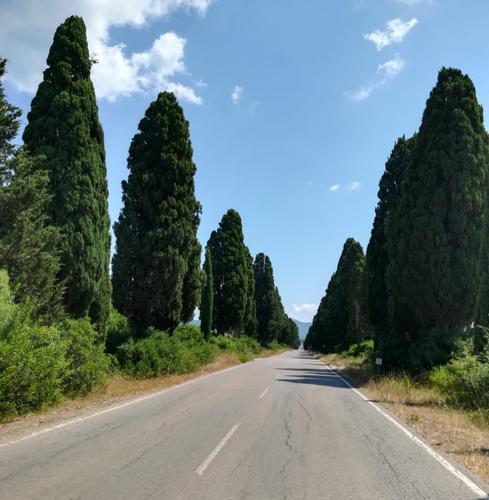 Il viale di cipressi della poesia di Carducci