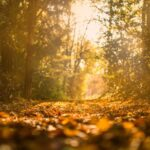 In Francia: il primo bosco per le ceneri di cremazione