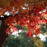 Siamo foglie dello stesso albero